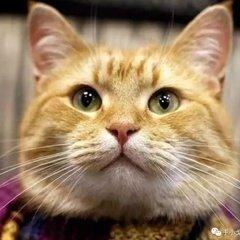 流浪猫鲍勃表情包