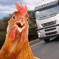 母鸡过马路模拟器