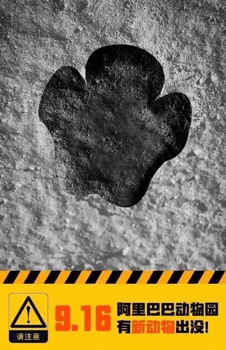 阿里动物园来新人啦,阿里巴巴新业务空熊登场